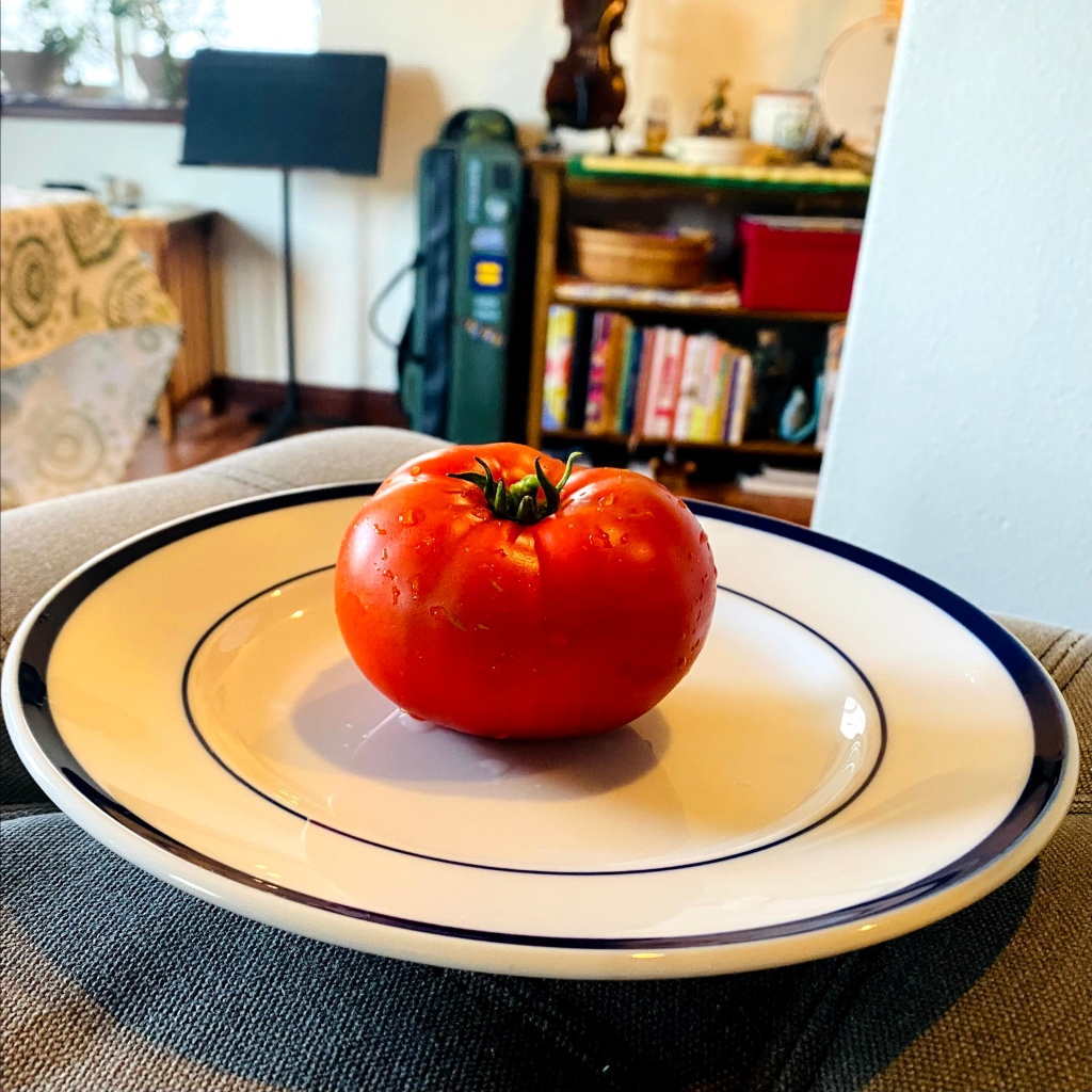 A perfect tomato on a white plate in the foreground and kitchen chaos in the background.